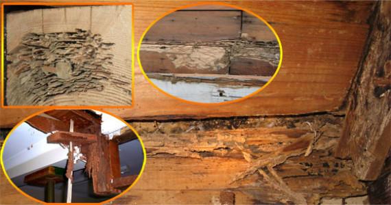 termite-damage-pictures